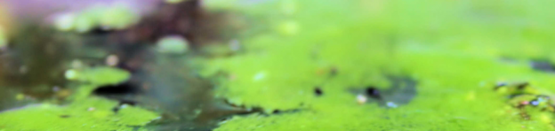 algae-logo